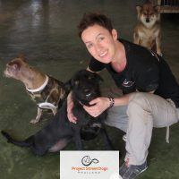 Project Street Dogs - Pawss Rescue Partner