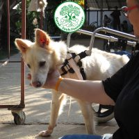 Saved Souls Foundation - Pawss Rescue Partner
