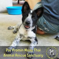 Por Promin Muay Thai Animal Rescue Sanctuary - Pawss Rescue Partner